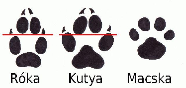 Kutya, macska, rókanyom