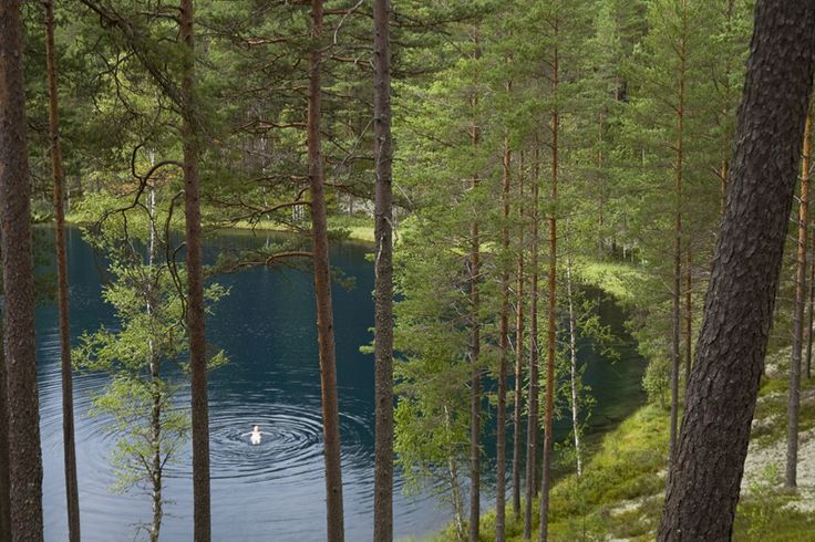 Brattfors Naturereserv. Pine tree forests and turquoise lakes