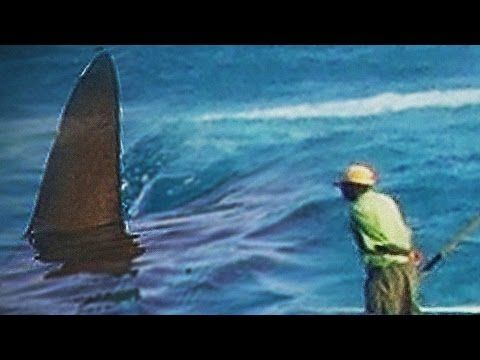 Group of Megalodon Sightings Hd Desktop