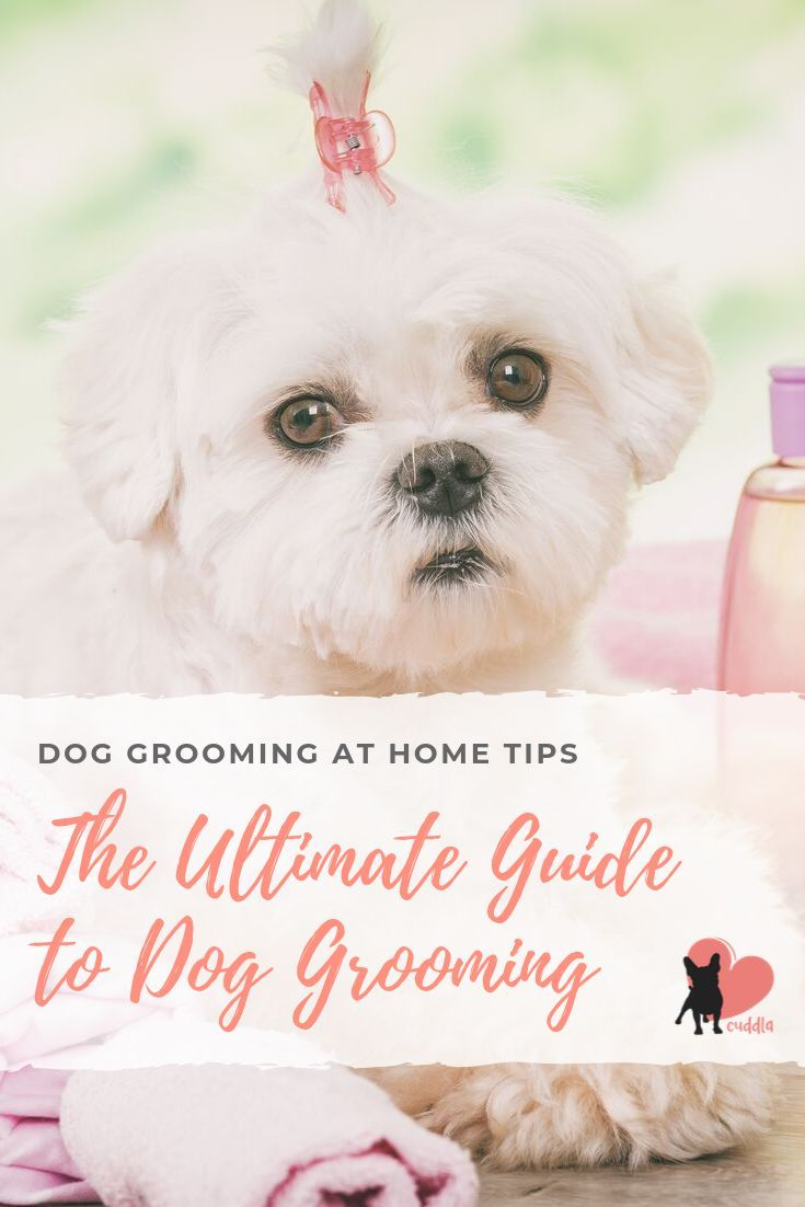 Dog Grooming At Home Tips The Ultimate Guide Dog Grooming Puppy Grooming Dog Grooming Tips