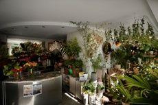 Projekt DŻUNGLA w Kwiaciarni Zielona Gęś.   Jeśli lubicie zieleń, a może chcecie przedłużyć wakacje? Wspaniałe rośliny z Oaza Palmy, babusy, oliwki, palmy ciekawe aranżacje, botanical art, kameleony, papugi... i wiele innych niespodzianek czeka! i fot. Marcin Chruściel