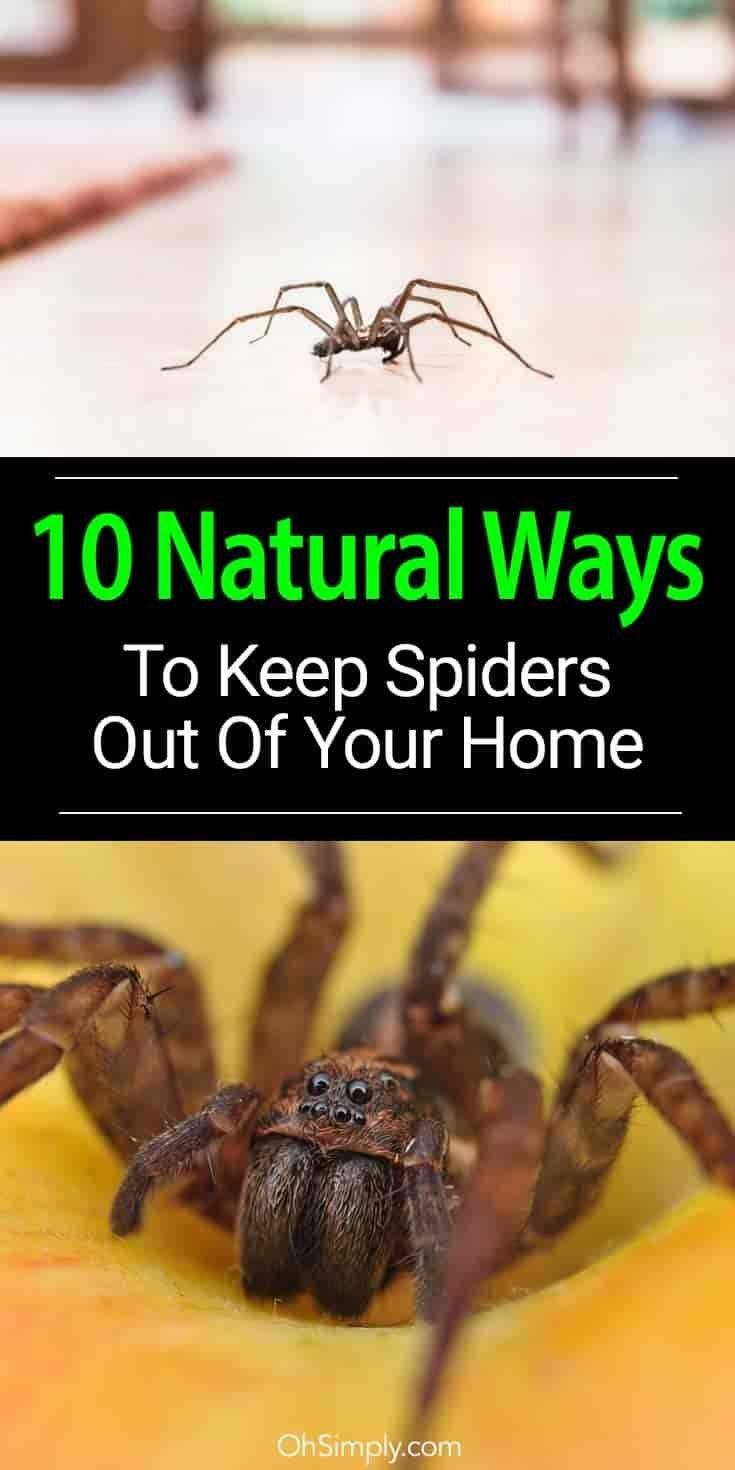 how to get rid of brown recluse spiders in your house naturally