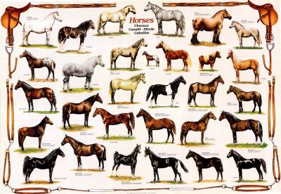 17 best images about horse breed chart on pinterest - Poster avec plusieurs photos ...