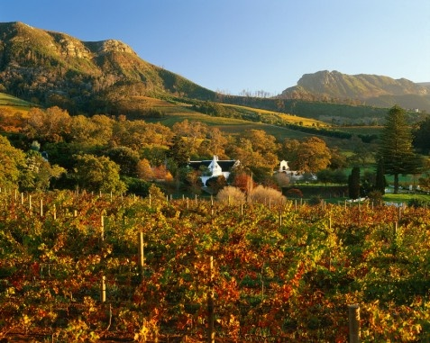 Constantia  On the southern slopes of the Table Mountain range and its world-renowned floral kingdom lies the historic Constantia valley, the cradle of winemaking in the Cape.