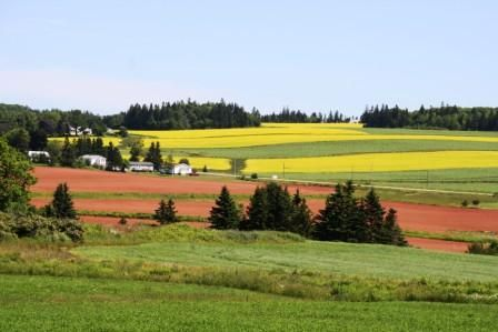 The contrast of colours by LDArsenault.