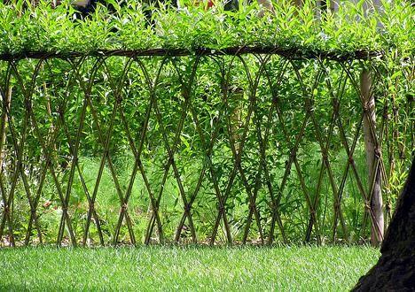 Ce trebuie sa stii despre constructia unui gard viu. Sfaturi practice