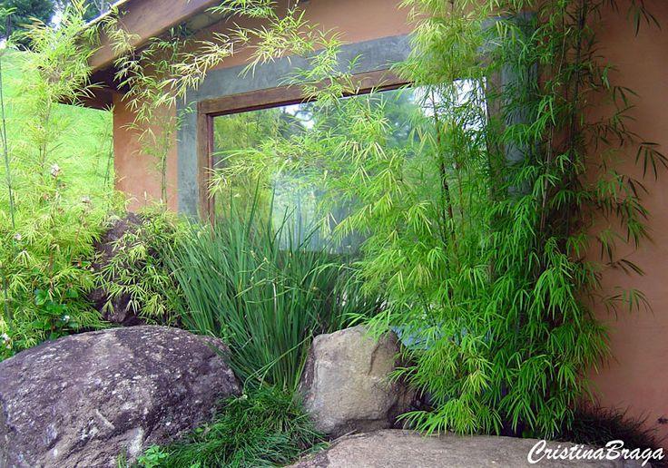 Bambu de jardim – Drepanostachyum falcatum - Arbusto lenhoso com folhas longas, estreitas, dispostas em raminhos laterais ...