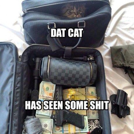 Dan Bilzerian's Cat