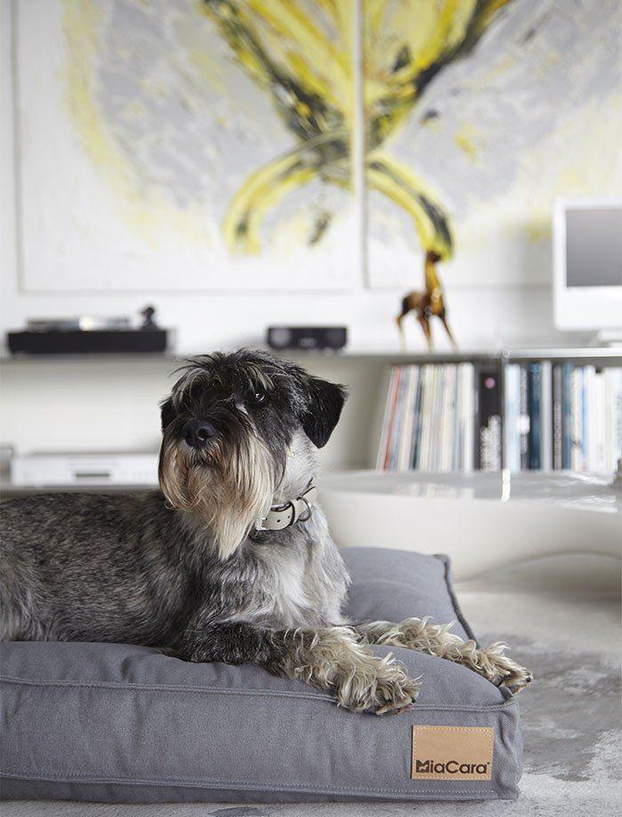 Hundepude (Lysegrå) - Lino