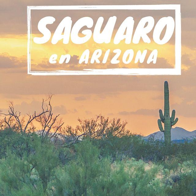 Le parc des cactus, en Arizona SAGUARO