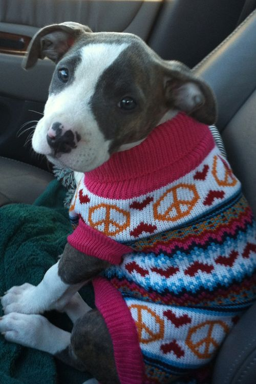 Puppy in a sweater with peace signs!
