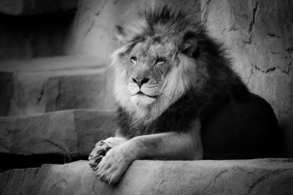 Animals Black And White Elephants 10000 Lions Big Cats: 25 Best Beautiful-black-and-white-photography Images On