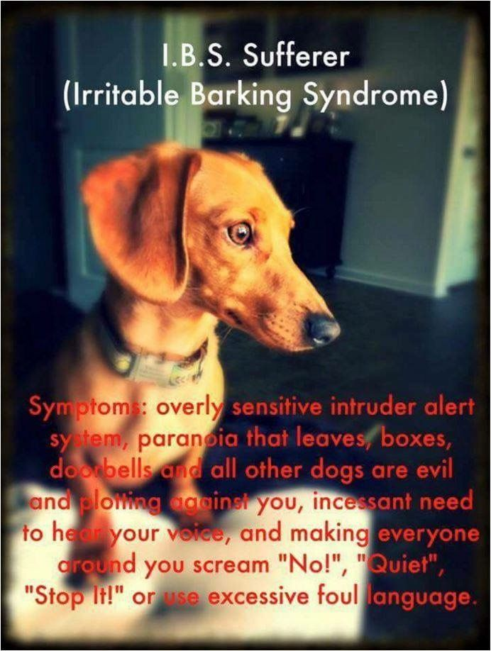 Dachshunds have Irritable Barking Syndrome