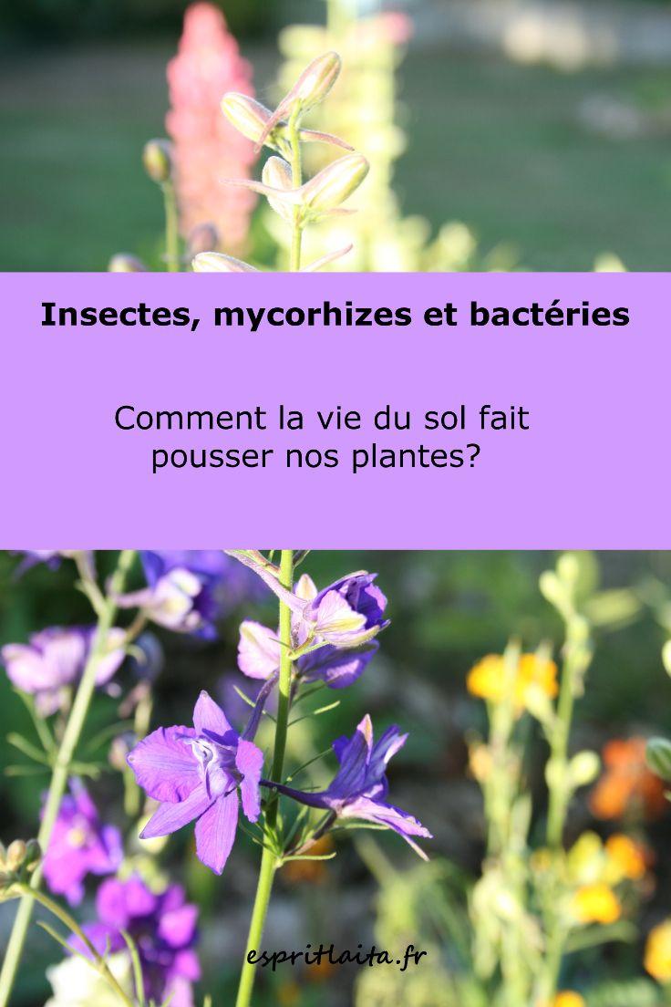 Les 186 meilleures images du tableau tout sur le jardinage sur pinterest jardinage plantes et - Purin d ortie desherbant ...