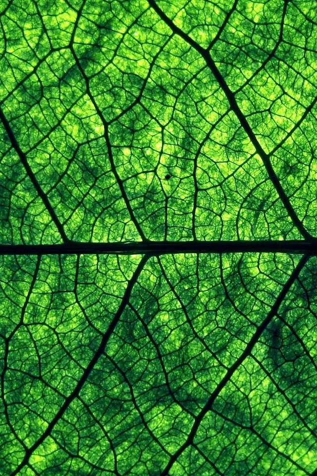 Fractals - veins of leaves.. and roots, branches, blood vessels... you name it, we are built of fractals.
