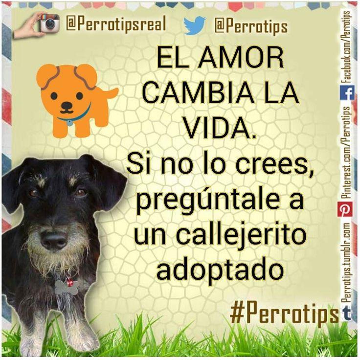 Sólo ve cómo mueve la cola un perro que ha sido rescatado de las calles. Es felicidad pura #perrotips