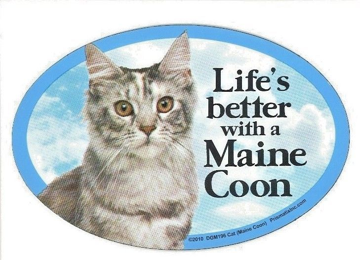 """Life's better with a Maine Coon (CAT)6""""x 4"""" Oval picture Magnet Made in USA NEW #Prismatix"""