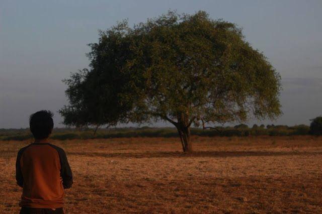 Nuansa Afrika di Savana Bekol Taman Nasional Baluran - Situbondo   Rizaltaf.com   Life's for Sharing
