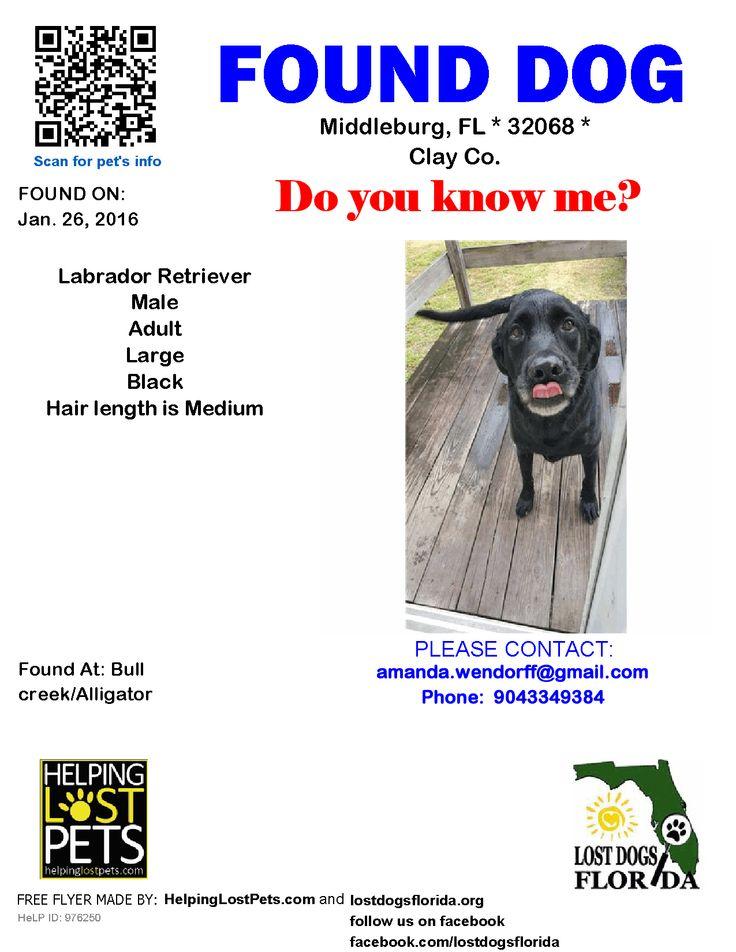 Found Dog - Labrador Retriever - Middleburg, FL, United States 1-27-16 TAKEN TO: Clay County Animal Control 904-269-6342 3984 FL-16 Green Cove Springs, FL 32043