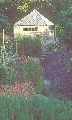 Briar Dell lavender farm and nursery, Cromwell, Central Otago, New Zealand