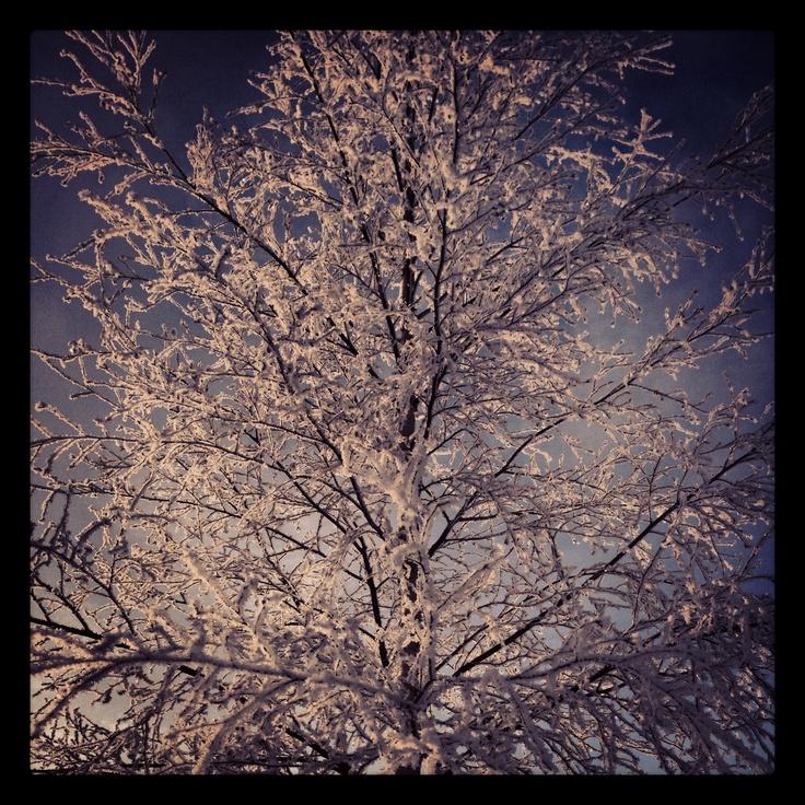 Snowcrystal tree