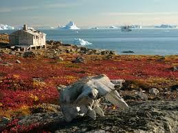 Tundra in Greenland
