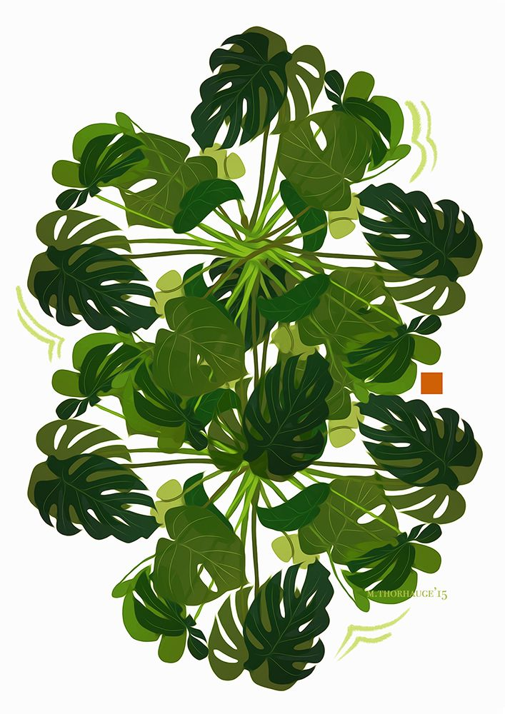 Monstera Deliciosa.So easy to love plants - and this one doesn't even need…