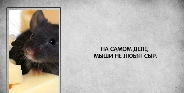 Мышки)