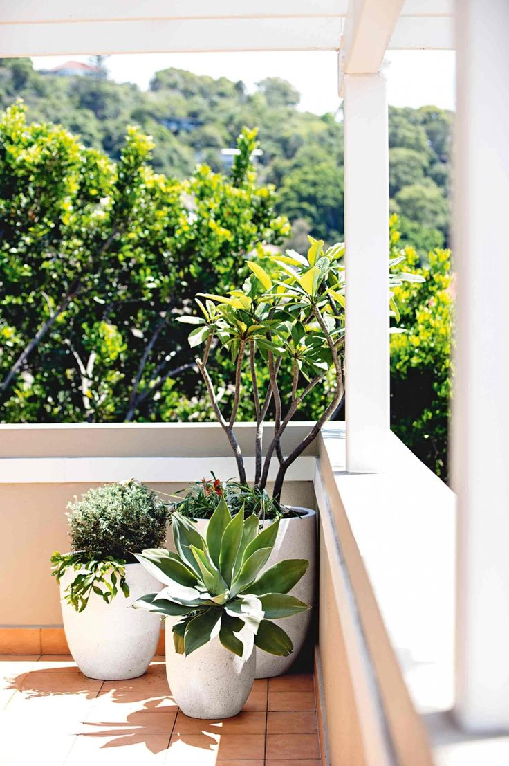 25 best ideas about balcony plants on pinterest patio for Terrace plants