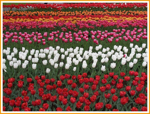 The colorful flowers that adorn this field are beautiful. #TrollbeadsWorldTour