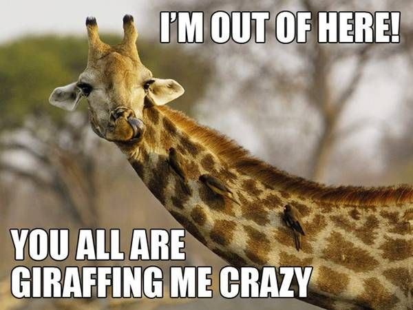 Giraffe Quotes And Sayings