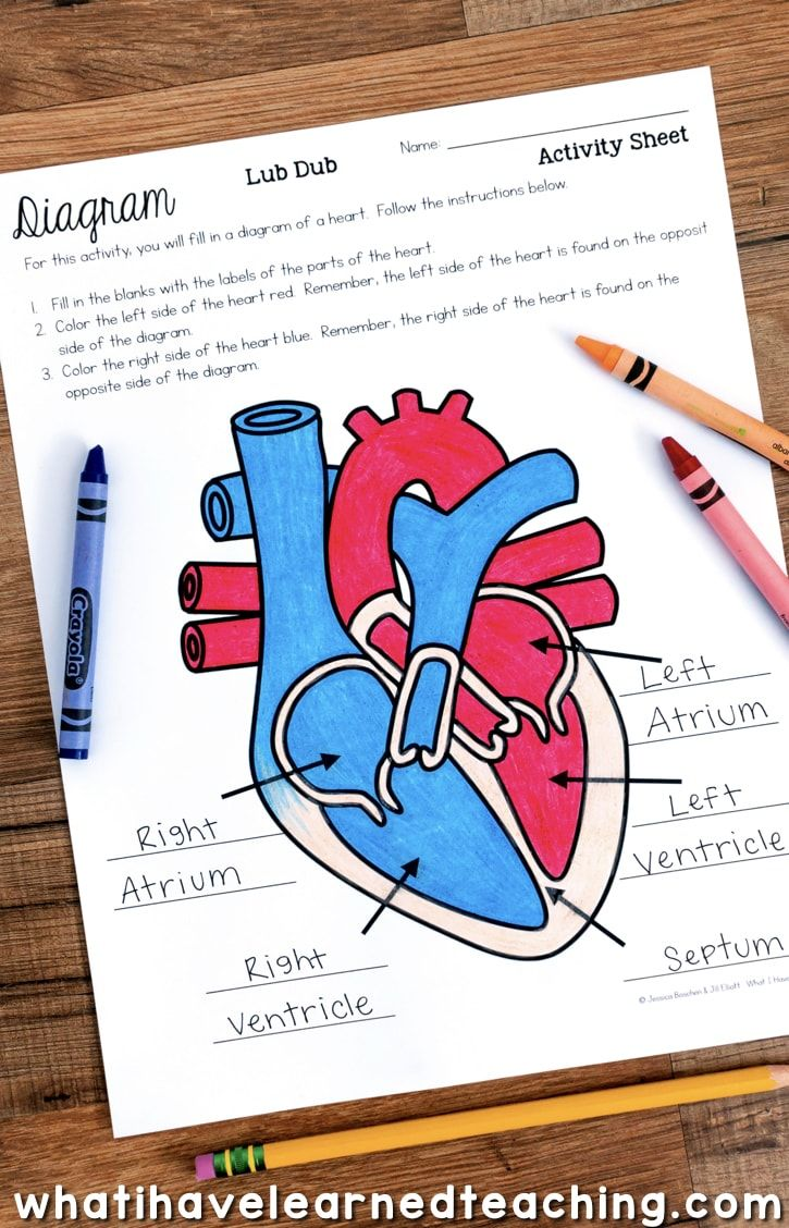 25+ best ideas about human heart diagram on pinterest ... human heart diagram unlabeled live heart diagram #10