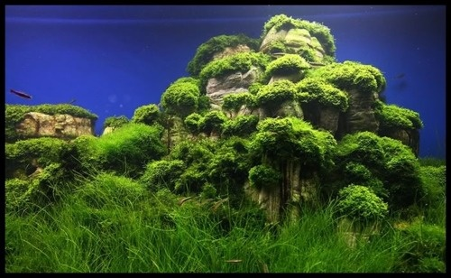 """The """"cliffs"""" look so cool. Reminds me of Zhangjiajie National Forest Park in China"""