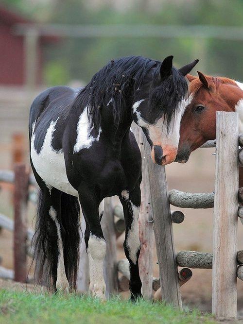 ☀Paint Horses