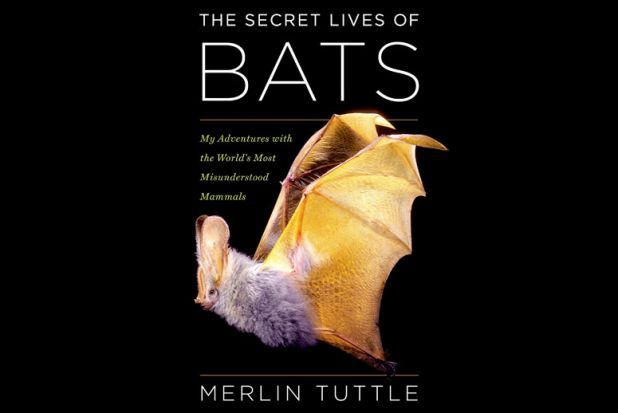 "Merlin Tuttle left a prestigious museum job in Wisconsin in the mid-1980s to start and direct Bat Conservation International in Austin, Texas. The decision seemed so crazy at the time that Texas Monthly magazine gave Tuttle its ""Bum Steer Award."" But Tuttle's dedication to saving bats has proven …"