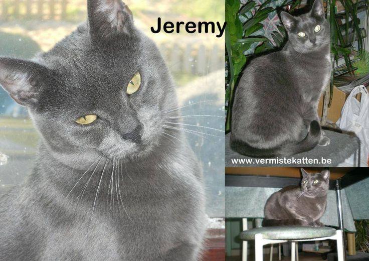 Jeremy #vermist sinds 4-1-2015 #Zedelgem #WestVl #Kattin Gesteriliseerd/: Ja Geboortedatum: 2010 Chip: Ja Chipnummer: Aanvullende kenmerken: Ze is zwart-grijs en heeft een witte vlek op haar borst en onderbuik. Is een schuchtere binnenhuiskat. http://j.mp/1zXBEWw Tess Vandendriessche https://www.facebook.com/tess.vandendriessche