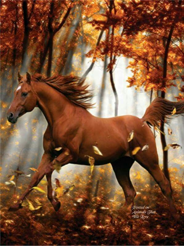 This picture is so beatiful,I love the becgroun,I love the horse and the leavs.:-D