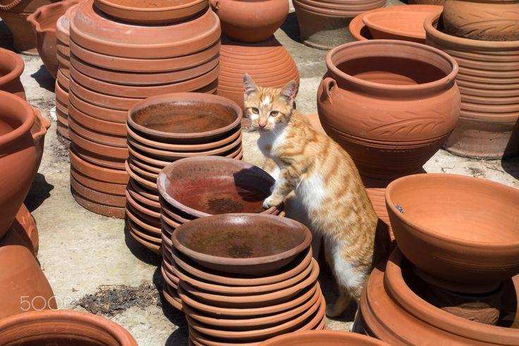 Cat time - Cat in ceramics