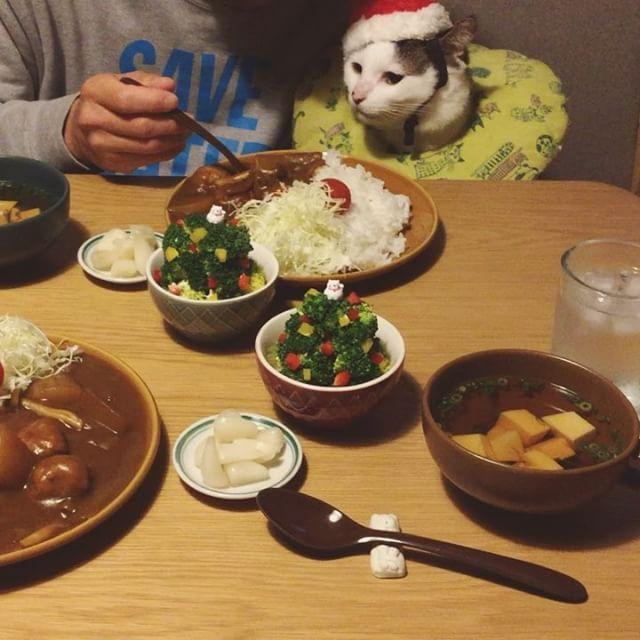 ほんで撮影の後は…。 貰えると思って、待つサンタ…。 でも何にも貰えんくて最後に、ガックリうな垂れサンタw おこめサンタは食べたのに食べてないふりして、カリカリ催促のやかましいサンタw #八おこめ #ねこ部 #cat #ねこ #八おこめ食べ物 #八おこめ動く #八おこめズラ #サンタ #クリスマス