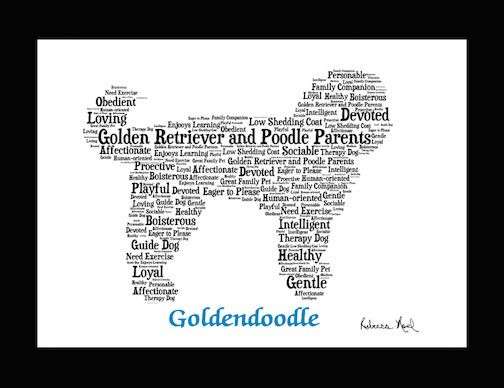 Traits of the Goldendoodle If you are a pet parent or are shopping for a dog lover, our pet portrait wall art makes an ideal addition to a dog lover's home's décor. This listing is for a Goldendoodle