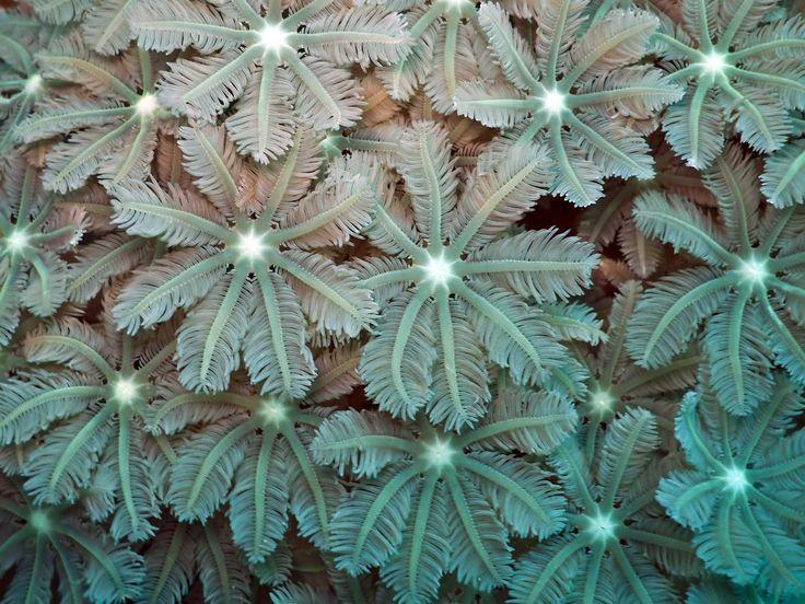 coral polyps - Google Search