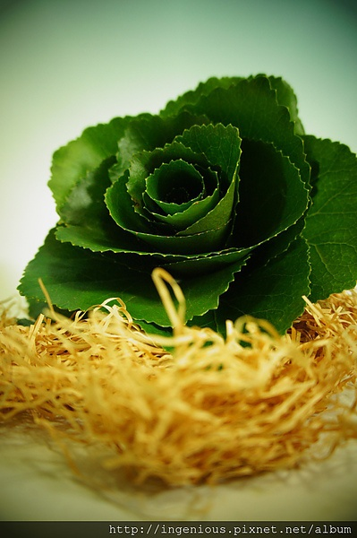 composite bouquet, rose made out of leaves. #glamelia. #leaves #bouquets