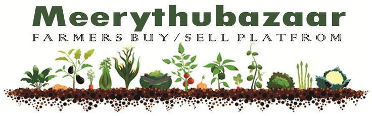 Meerythubazaar is farmers e-trading platform where farmers can sell their crops to merchants, sell seeds, plants and manure to other farmers in need. Farmers and Merchants can easily search for what they are looking at, identify the places of availability, price and buy them easily. For more details visit http://www.meerythubazaar.com/ or call 09666300003.