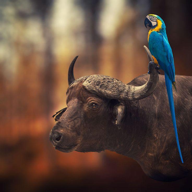 Les images surréalistes de Caras Ionut  2Tout2Rien