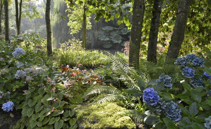 die besten 25 schattengarten ideen auf pinterest schattenspendende pflanzen schattengew chse. Black Bedroom Furniture Sets. Home Design Ideas