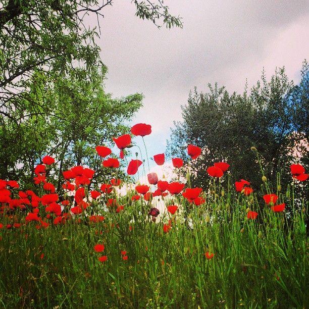 Primavera al #Pallars / #Spring in #Pallars