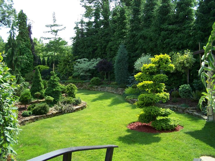 Garden with conifers.