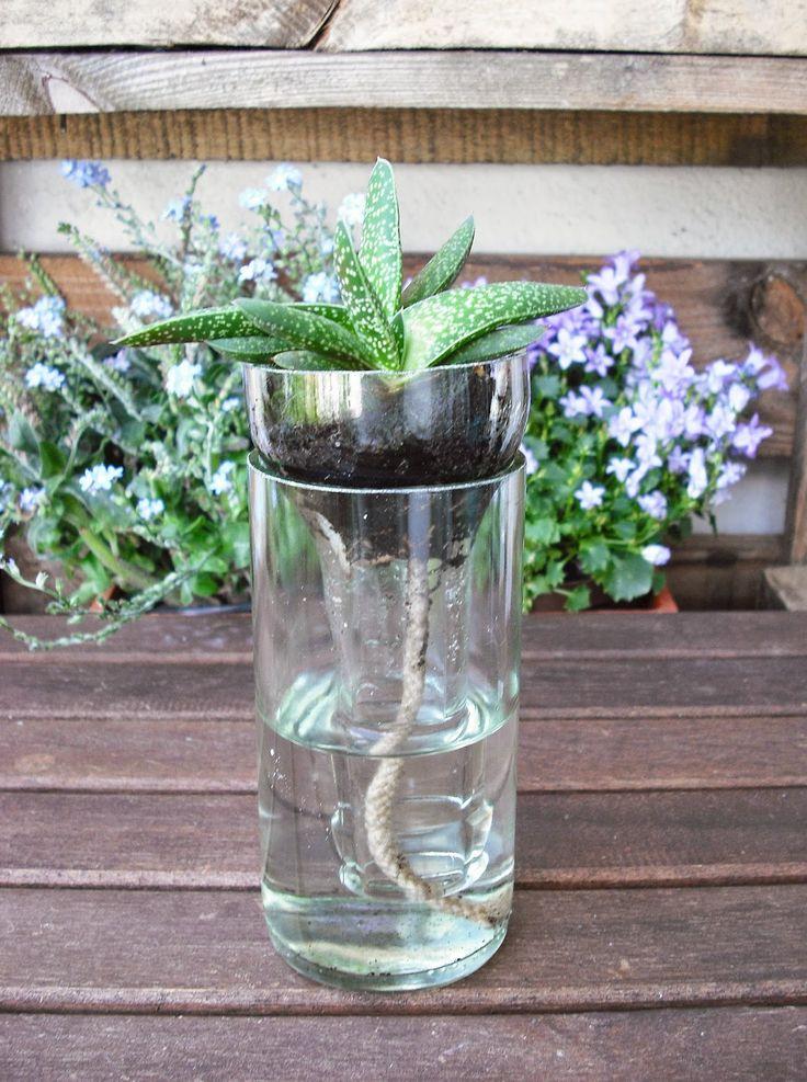 diy: beer bottle plant holder for plant cutting,