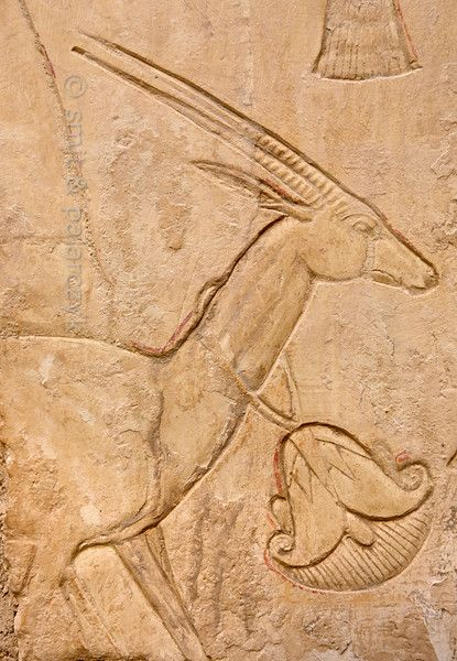 This gazelle, wearing a lotus flower around its neck, is part of the reliefs that adorn the Sun Court of the tomb of Ankhhor.  Ankhhor was a high official during the reigns of Psammetichus II and Apries.(26th dynasty.  His tomb (TT 414) can be found in the Asasif Necropolis on the Westbank at Luxor. Photo Paul Smit and Mick Palarczyk.