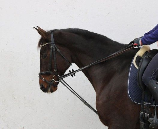 Swiss Federation Bans Use of Draw Reins in 2016